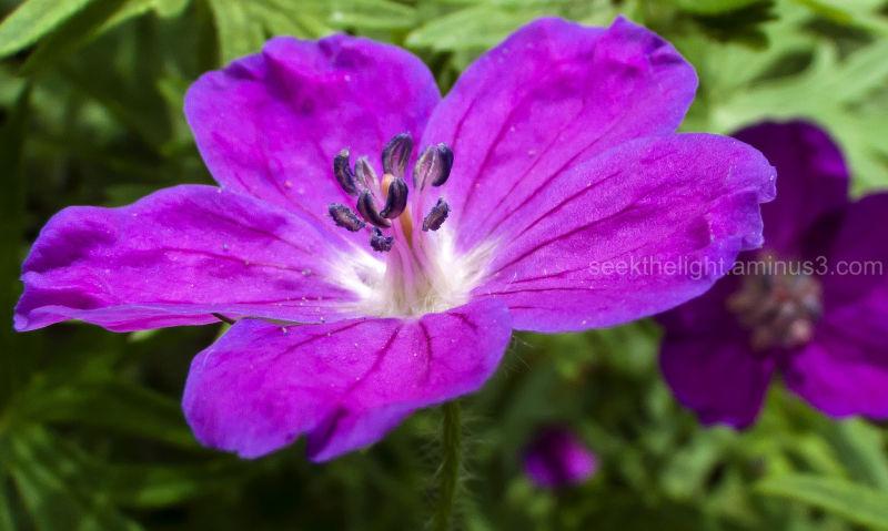 Mystery in Purple