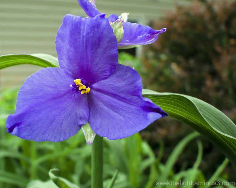 Blue-violet Beauty