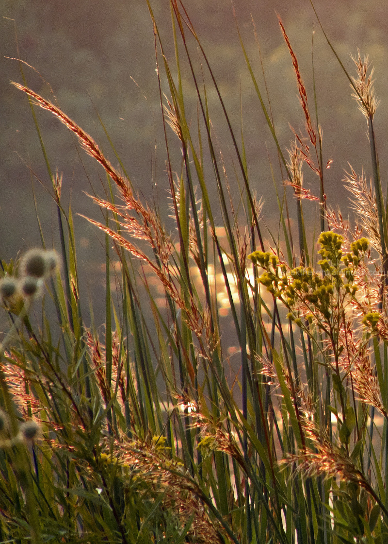 Grasses and Whatnot