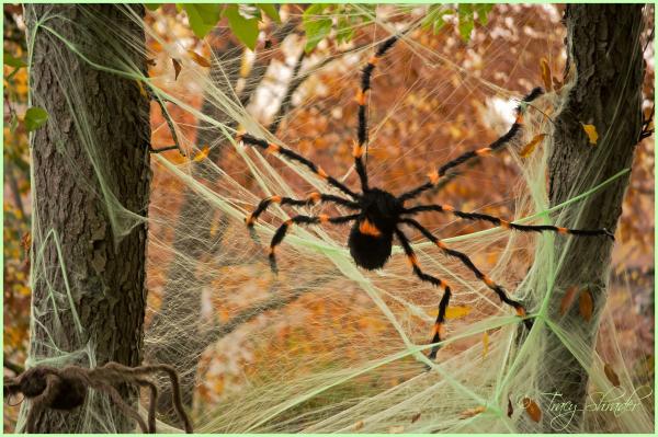Neighborhood Spiders