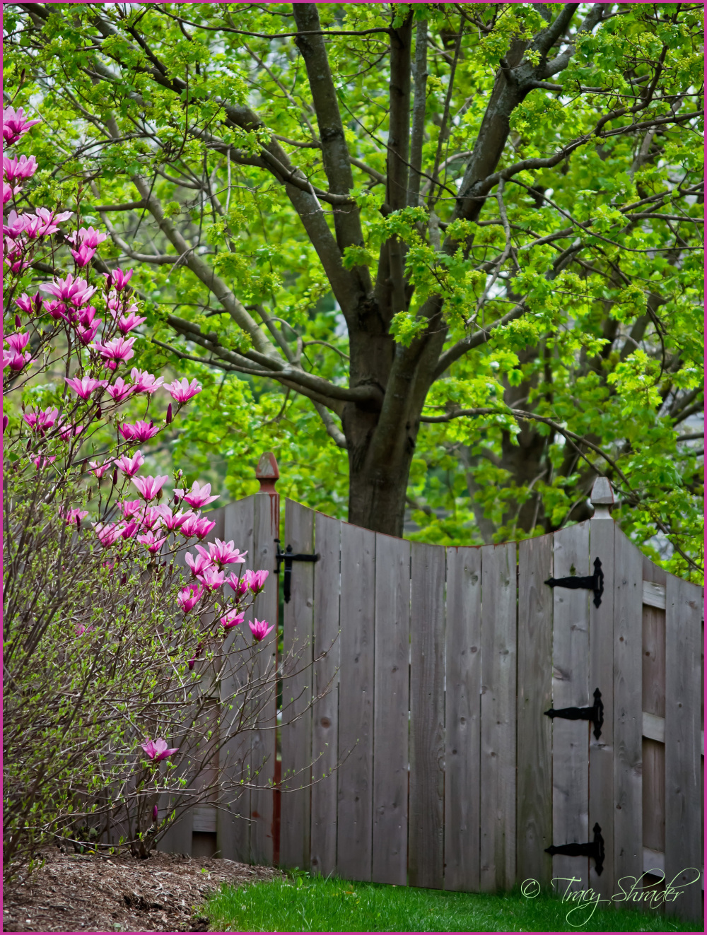 Looks Like Spring...