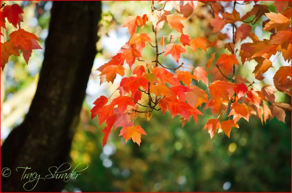 Fabulous Fall Color