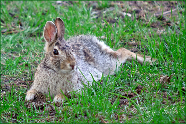 One Hot Rabbit