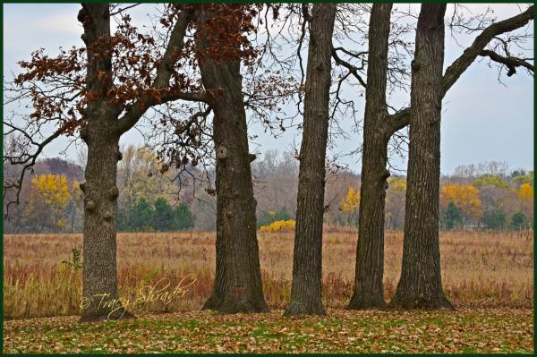Oaks at Good Shepherd