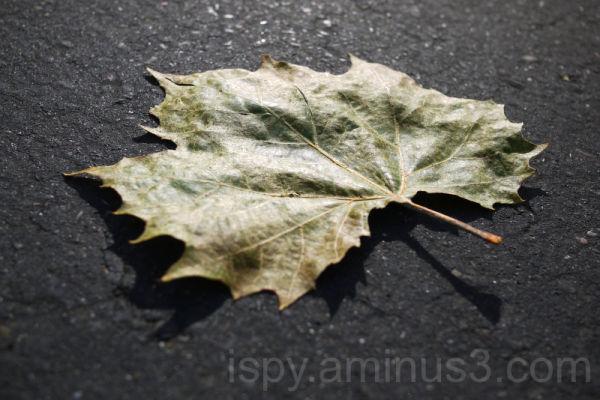 Shimmery Fallen Leaf
