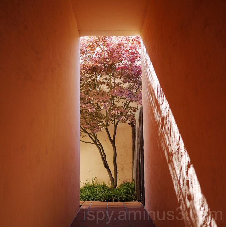 Framed Fall Tree