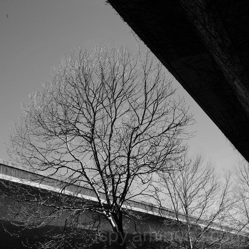 Trees Among the Concrete