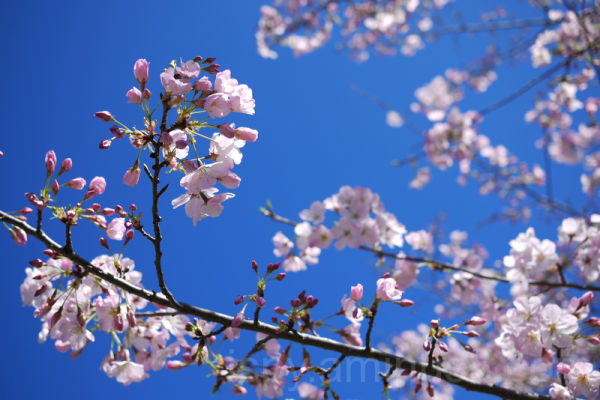 Spring, Sprung