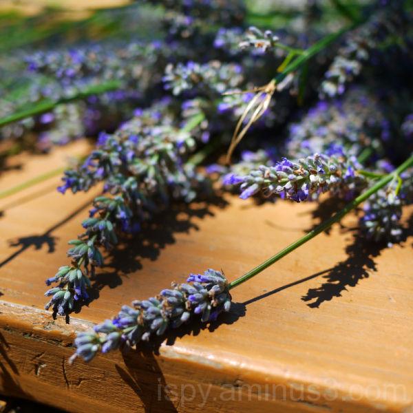 A Bit of Lavender