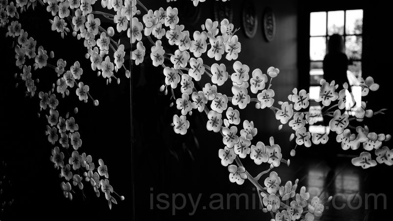Cherry Blossoms on the Wall