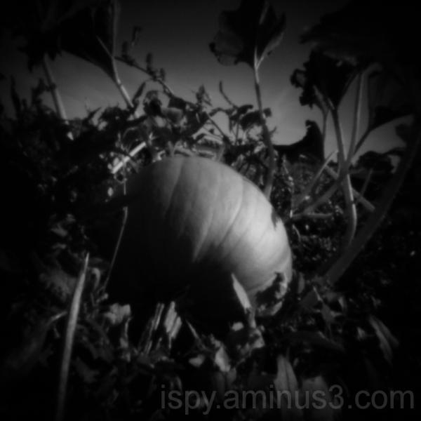 Pumpkin through a Pinhole
