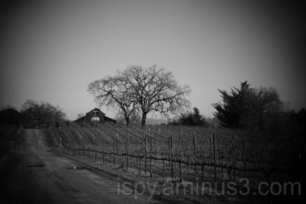 Old Barn & Vineyard