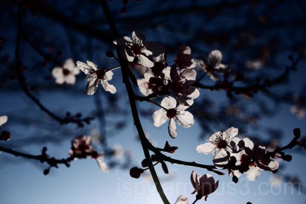 Spring, Sprung?