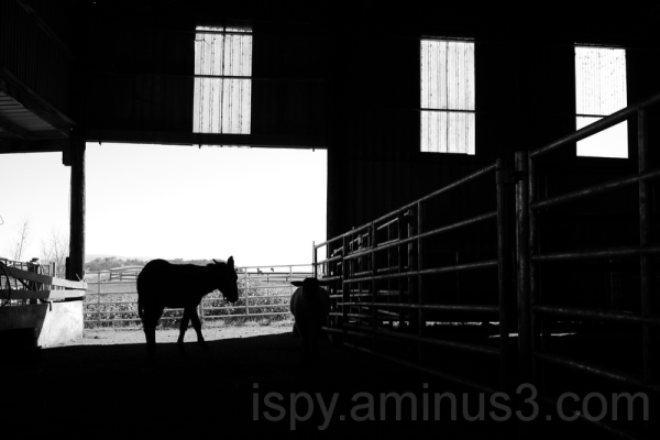 Donkey in the Barn