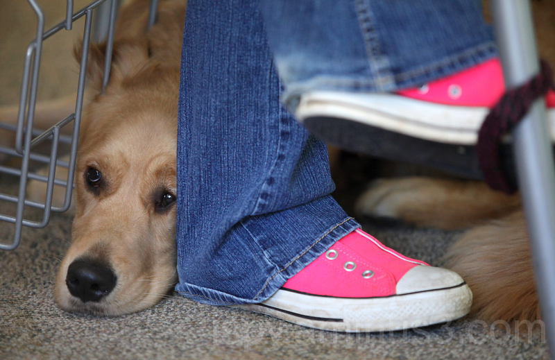 Service Pup and Pink Cons