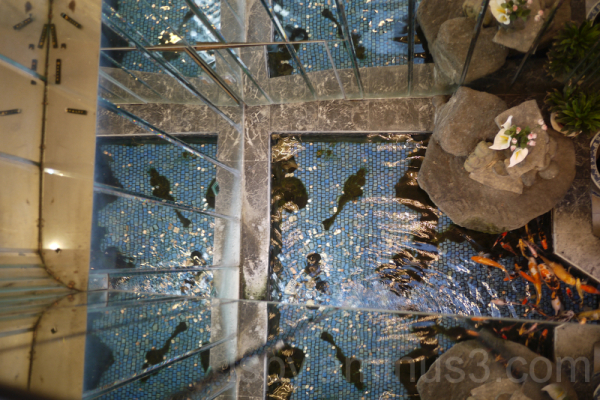 Koi from Above