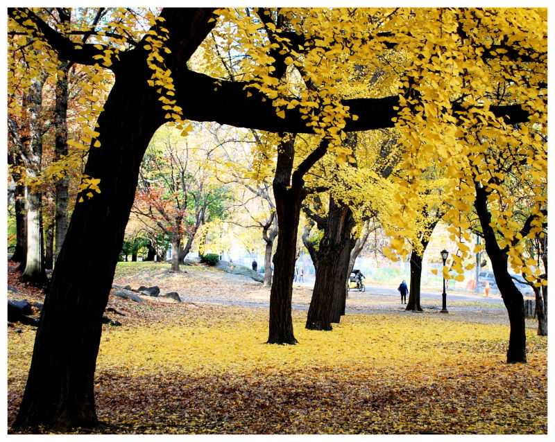 Yellow leaves carpet