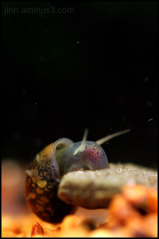 Dwellers of my aquarium