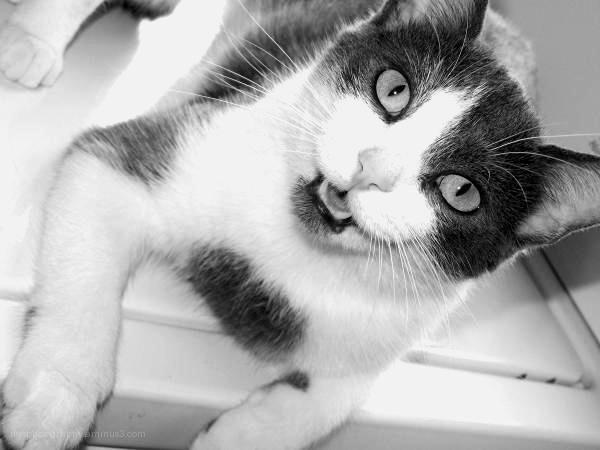 portrait of my cat sugar