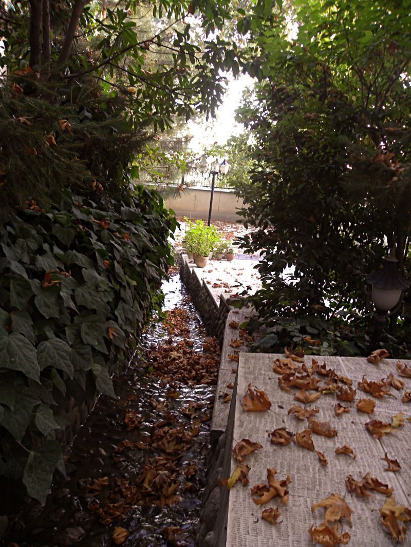 Fall in our backyard....