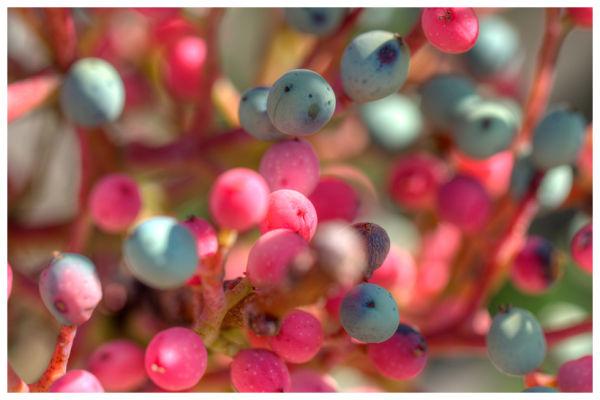 strange berries
