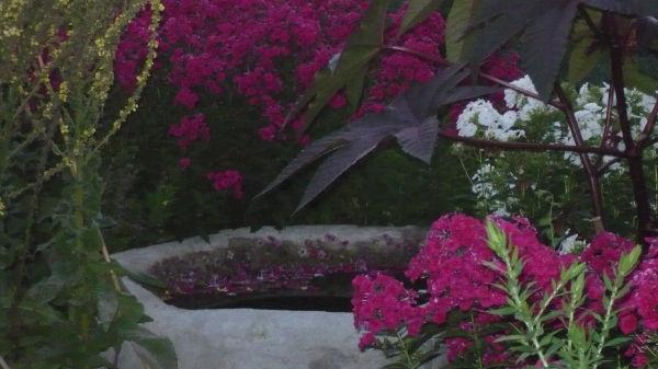 Larkwhistle Garden