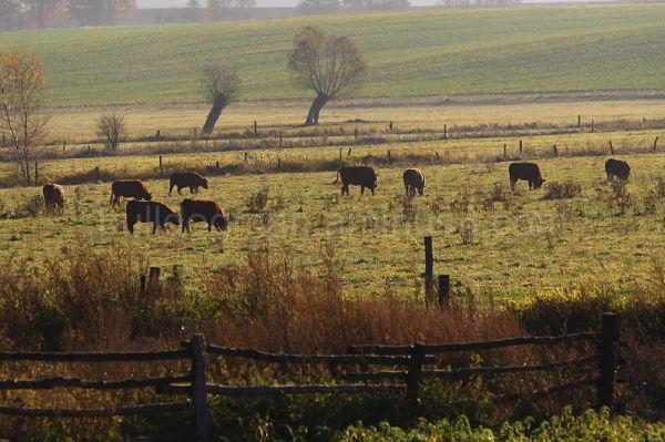 Bull Meadow
