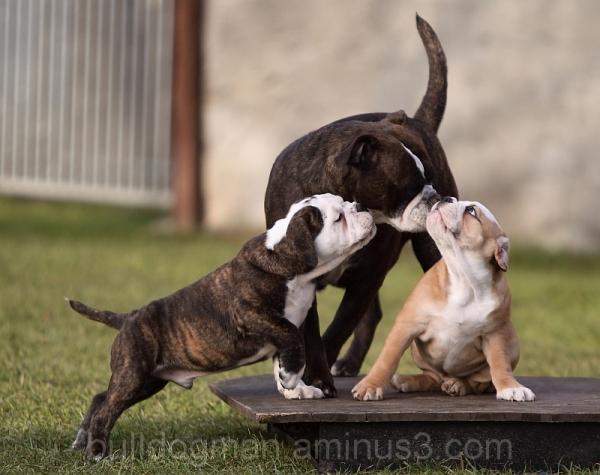 Pickwick Haja with your puppy