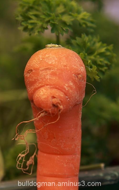 carrot :-)