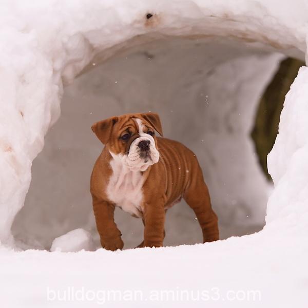 my igloo