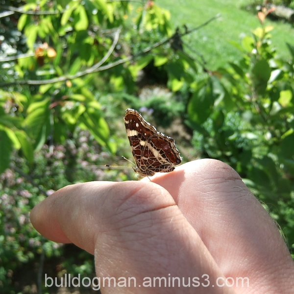A butterfly on my hand.