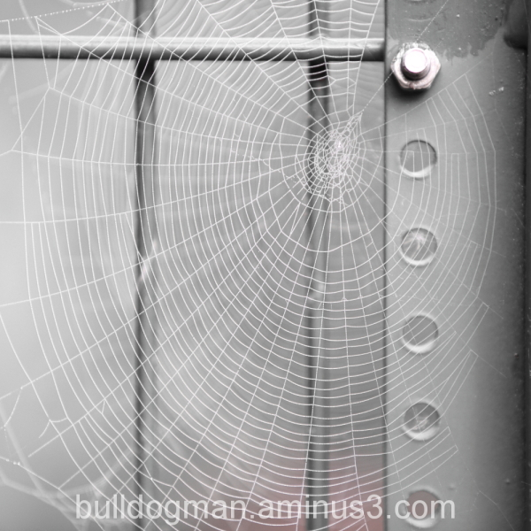 Hand in hand / fence and spider web