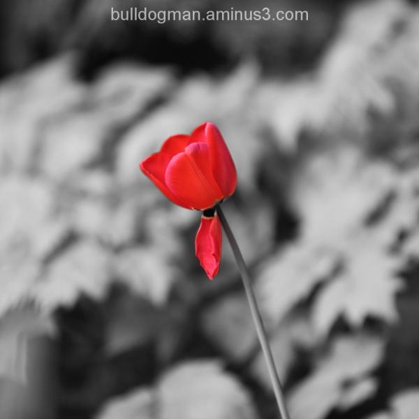 ephemeral beauty