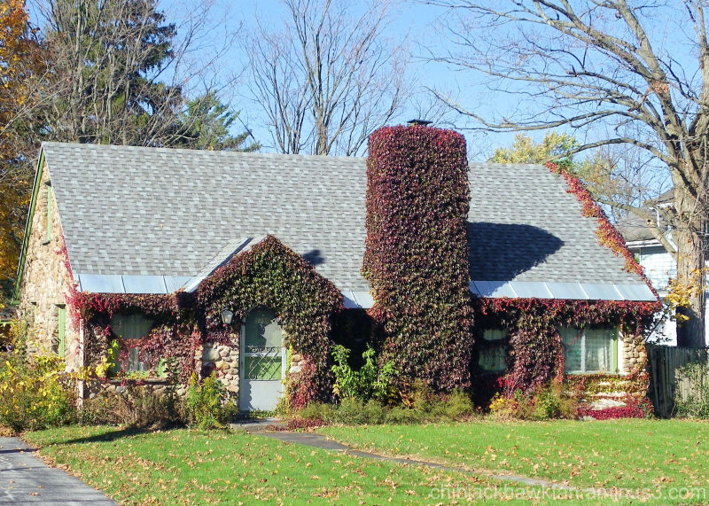 Vine covered cottage