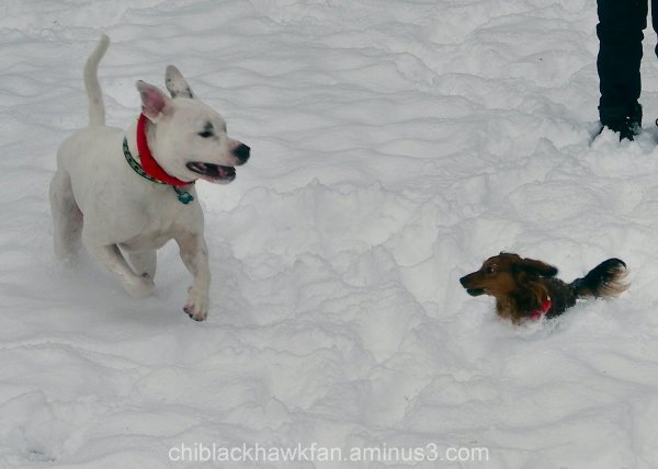 A Christmas romp in the snow