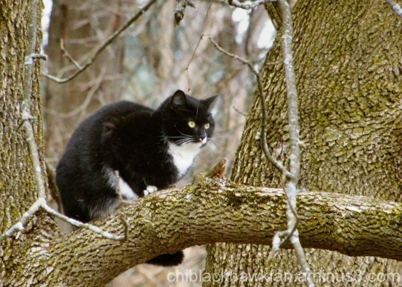 Sassy, in a Tree