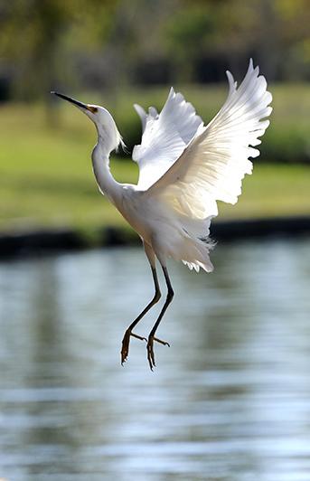 Exit the Egret