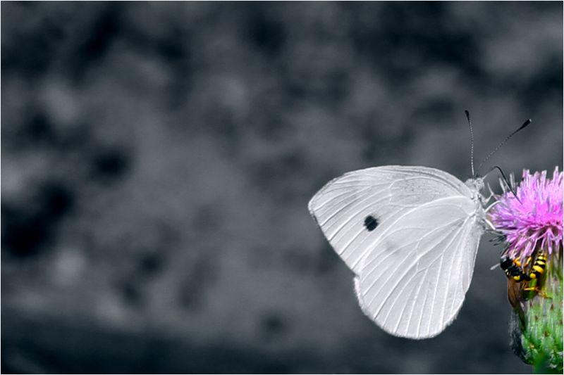 Bee & Butterfly