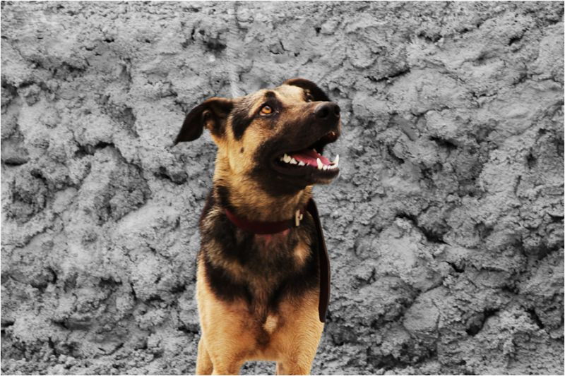 Dog Sight