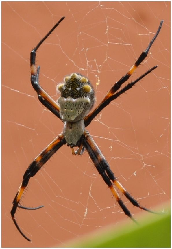 a happy faced writing spider