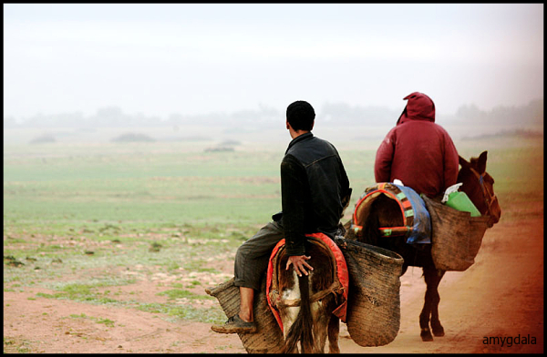 farmers, mule, early morning, rural