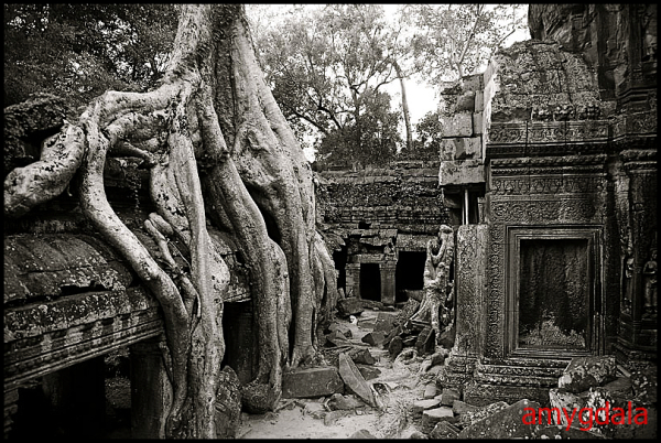 Deep roots...
