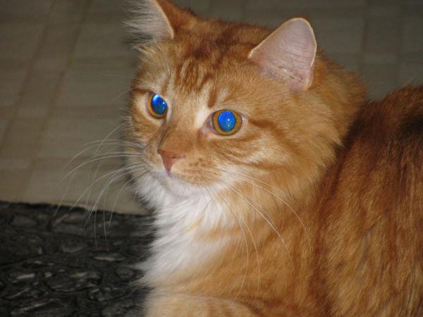 Bella   Guildo's cat