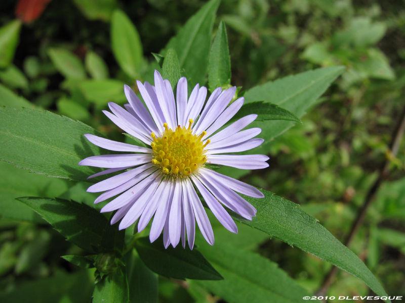 Early autumn flower