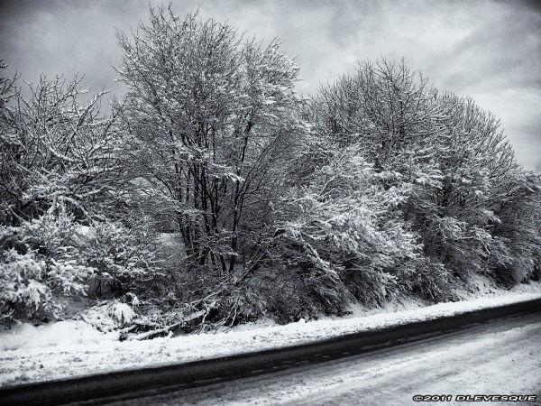Winter Wonderland B/W