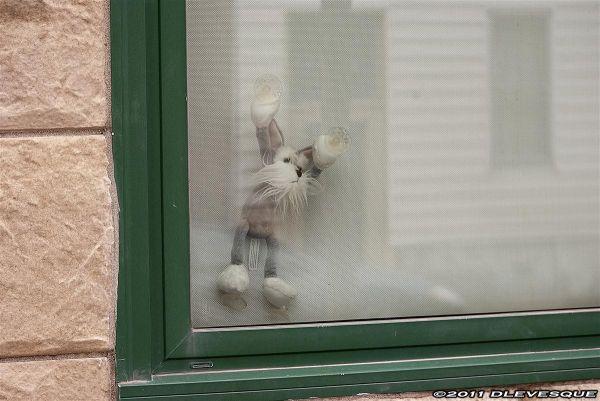 Wanting out!