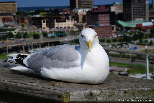 Friendly Seagull 1 of 4