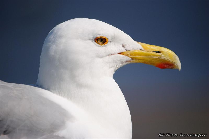 Friendly Seagull 4 of 4