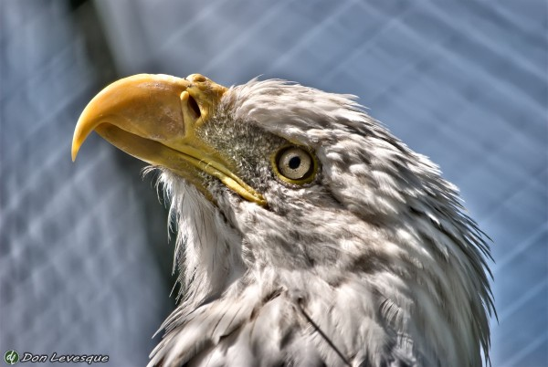 Eagle's eye - hdr
