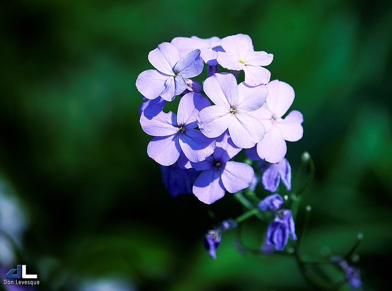 The Beauty of Flowers - part 2a